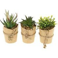 com-four® 3X Künstliche Pflanzen [Auswahl variiert] täuschend echte Dekopflanzen in Papiervase Kunstpflanze für Haus Garten Balkon und Büro 03 Stück - Größe M