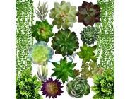N2 17 Stück künstliche Sukkulenten Sukkulenten Blumen Arrangement Picks hängende Schnur von Perlen Pflanze dreidimensionale Dekoration Kombination Beflockung realistische Sukkulenten Pflanzen