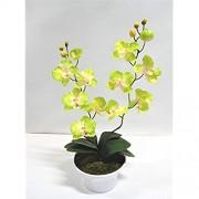 Orchidee 2 Rispen Orchideenzweig Phalaenopsis Kunstpflanze Kunst Dekopflanze Topfpflanze Seidenblume Kunstblume Pflanze Blume künstlich unecht Topf Keramik 60 cm gelb-grün 60301-01 getopft F73