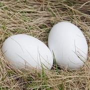 Xinger künstliche Ei gefälschte Simulation Lebensmittel Gemüse lehren Ornament Fotografie Requisiten kreative Geschenke für Kinder weiß